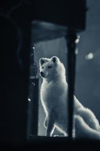 WinterJam_Crowder-5